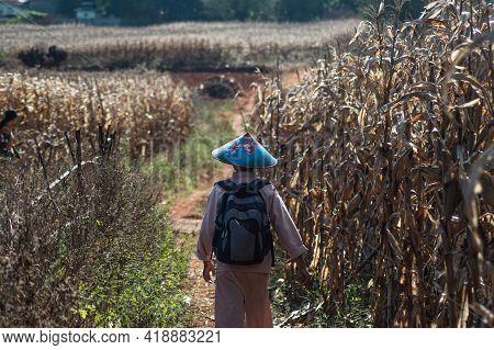 A Burmese Man Wears A Blue Hat And Walks In Corn Fields
