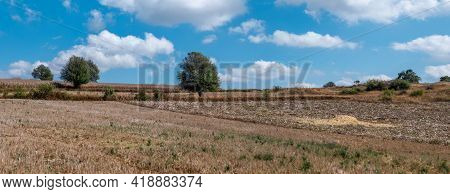 Agricultural Rice And Corn Field Under A Blue Sky In Myanmar