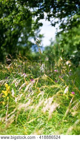 Colorful Wildflowers With Green Defocused Grass. Magic Natural Background With Spring Flowers Defocu