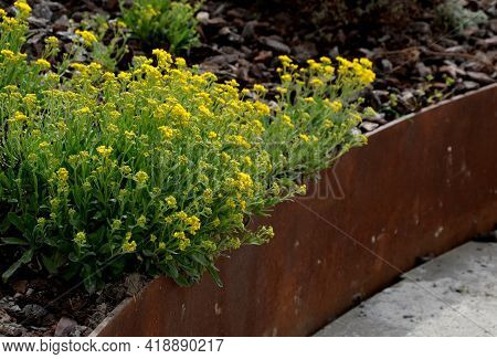 The Flower Bed Is Bordered By A Rusty Sheet Metal Design. Perennials Bloom In The Flowerbed. Paving