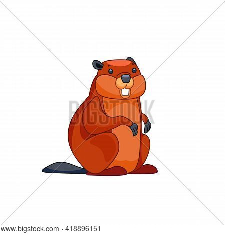 Beaver Walks Over And Looks Around In Surprise. Front View. Cartoon Character Of A Small Mammal Anim