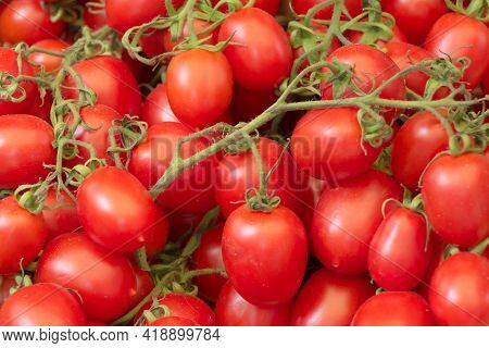 Bunch Of Ripe Fresh Red Bio Cocktail Tomatoes From Above. Group Of Organic Nature Solanum Tomato Foo