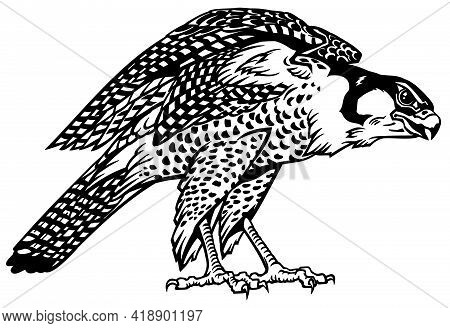Falcon A Hunter Ready To Fly. Bird Of Prey. Falconry. Black And White Isolated Vector Illustration