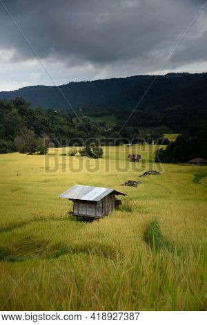 The Beautiful Scenery Of The Golden Terraced Rice Field In Khun Pae, Chiang Mai, Thailand.