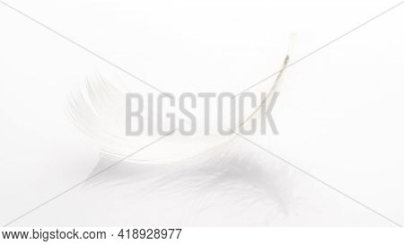 Feather Background. Nature Bird Feather Texture Closeup On White In Macro Photography, Soft Focus. A