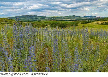 Spring landscape in Palava near Dolni Dunajovice, Southern Moravia, Czech Republic