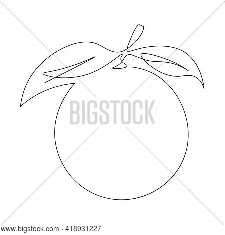 Continuous Single Line Drawing Of A Orange. Drawing A Whole Fruit With A Single Line. Abstract Style