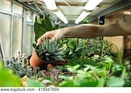 Greenhouse Small Business: Growing Houseplants For Selling, House Garden Design, Flower Store Shop.