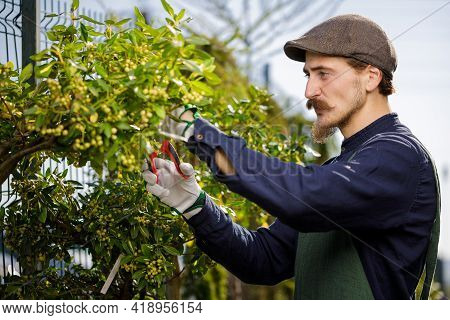 Cropped Shot Of A Young Male Gardener While Clipping Or Prune The Tree In Horticulture