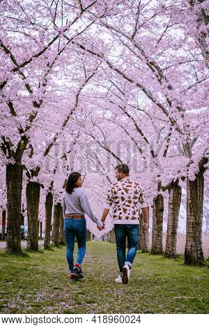 Sakura Cherry Blossoming Alley. Wonderful Scenic Park With Rows Of Blooming Cherry Sakura Trees And