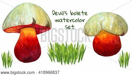 Devils Bolete Watercolor Set With Mushroom And Grass Bunch. Bright Toadstool Collection Isolated On