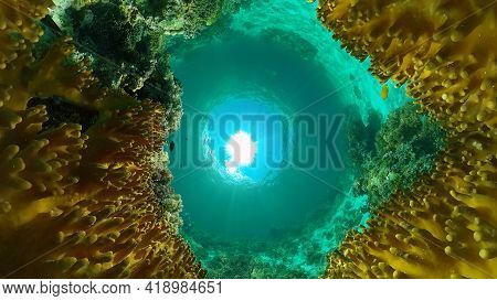 Tropical Coral Reef And Fishes Underwater. Hard And Soft Corals. Philippines.