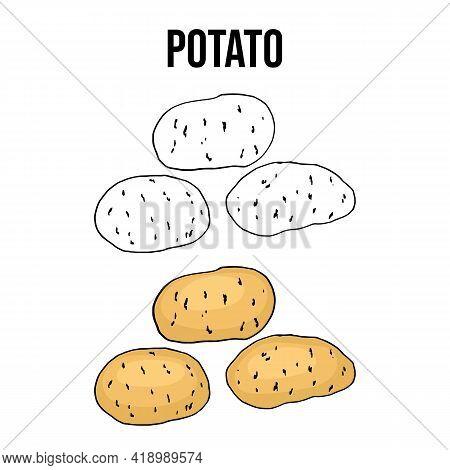 Potato Tuber Vegetable On A White Background. Hand Drawn Vector Illustration
