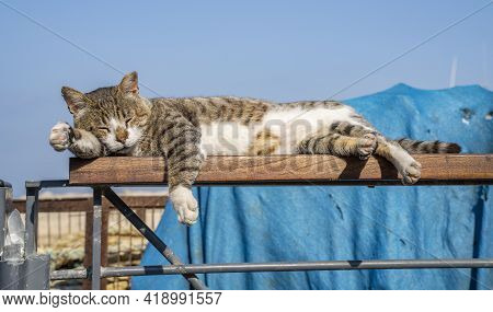 An Alley Cat, Sleeping In The Sun In The Jaffa, Israel, Port.