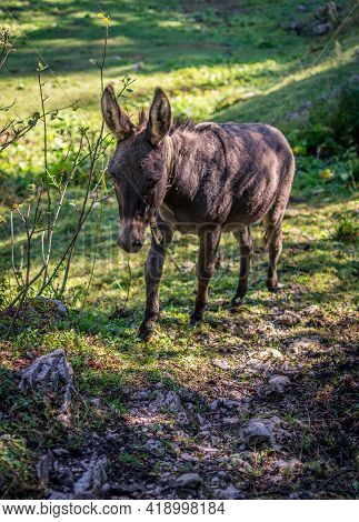 Portrait Of A Donkey Grazing On A Lonely Mountain In The Slovenian Alps Mountain Range