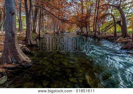 Cypress Trees with Beautiful Fall Color and Large Roots Lining the Crystal Clear Guadalupe River, TX