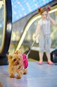 Little girl talks by cell phone and held on leash small dog next to escalator in mall. Focus on dog. poster