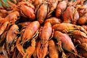 Image of background with many boiled crawfishes poster