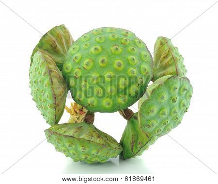 Lotus Seed Pod On White Background