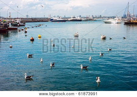 Yachts and boats Punta del Este Uruguay poster