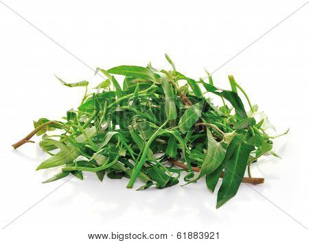 Water Spinach Isolated On White Background