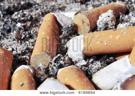 Cigarettes In Ash