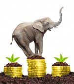 Happy Elephant on a growing pile of a golden money. Strong investments concept. poster