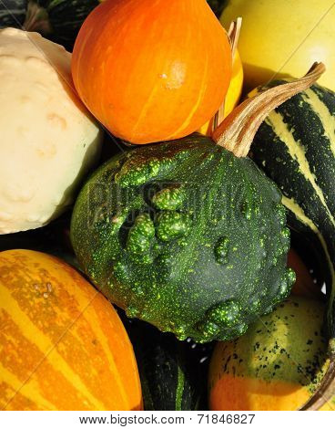 Colorful Pumpkins Closeup