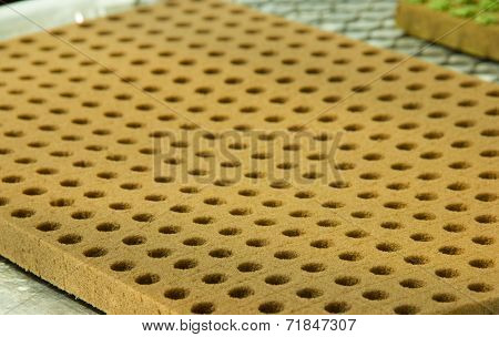Phenolic Sponge for planting seeds to hydroponic culture poster