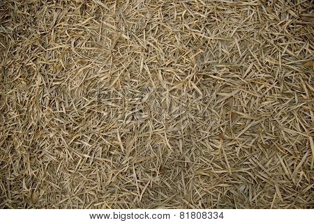 Pile Of Dry Bamboo Leaves Texture