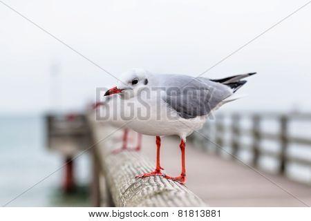 Seagull at Pier Handrail