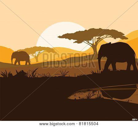 Animal - Illustration