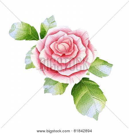 Pink Watercolor Rose