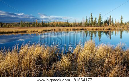 Lake Near Fairbanks With Dry High Yellow Grass And Trees Reflecting In Water In Autumn