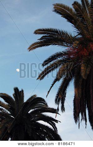 Palmthrees