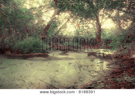 Swamp Moorland