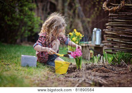 child girl planting hyacinth flowers in spring garden