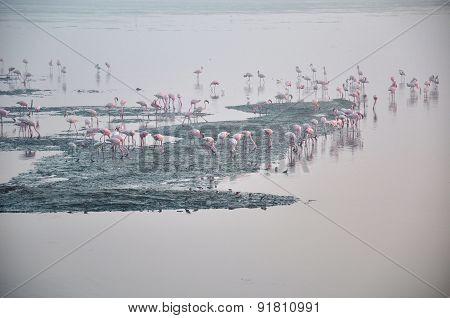 Flamingos Five