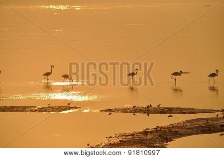 Flamingos Six