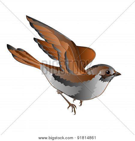 Little Bird Sparrow In Flight Vector