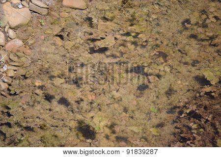 minnows in a creek