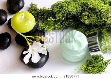 Cream Jar Algae Top View