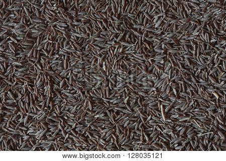 cumin photo, cumin background, cumin seeds, pile cumin, dry cumin, indian cumin, asian cumin, spice cumin