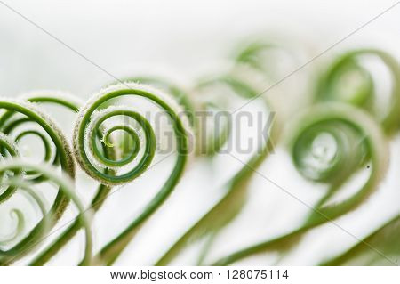 Young Palm Tree Leaves Sprouts