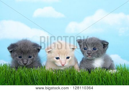 Three One Month Old Kittens In Tall Grass.