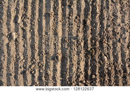 Loosened brown grooved soil texture - background. Landscape.