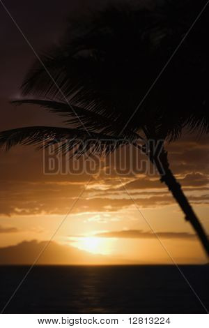 Palm tree silhouette against sunset over Pacific Ocean and Kihei island in Maui, Hawaii, USA.