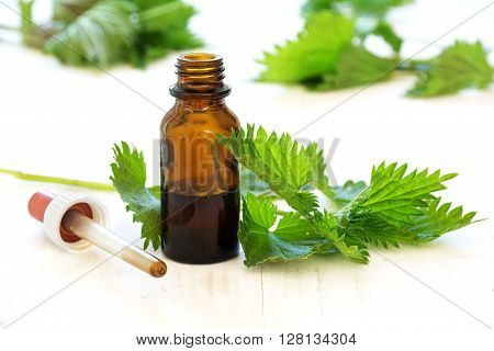 nettle tincture in a small bottle and fresh leaves on white wood medicinal herb for overweight diabetis and kidney weakness selected focus narrow depth of field