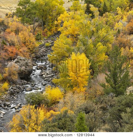 High angle view of forest in Fall color with rocky stream running through it.