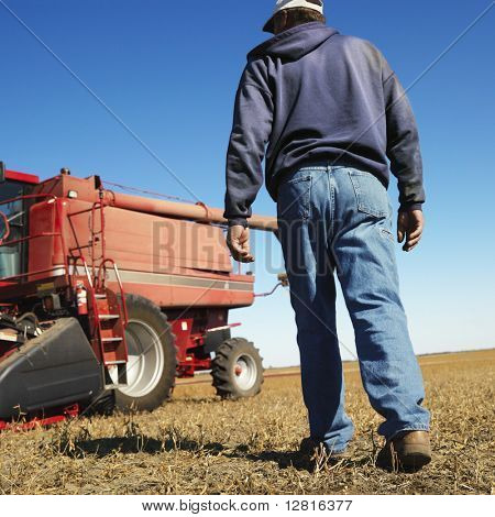 Low angle back view of Caucasion middle-aged male farmer walking toward combine in soybean field.